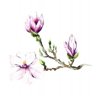 Papiers peints Le Magnolia fleurs aquarelle isolé sur le fond blanc