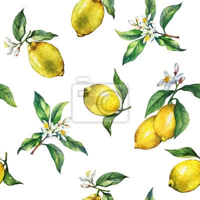 Le modèle sans couture des branches de citrons frais d'agrumes avec des feuilles et des fleurs vertes. Main, tiré, aquarelle, peinture, blanc, fond
