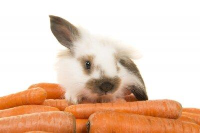 Le paradis des lapins