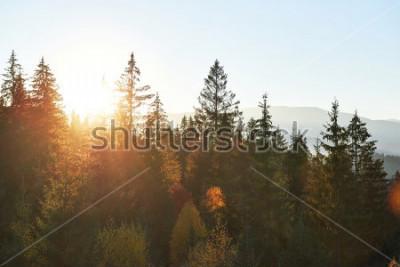 Papiers peints Le paysage d'automne de montagne avec forêt colorée. Scène dramatique du matin, feuilles d'automne rouges et jaunes. Lieu place Carpates, Ukraine, Europe.