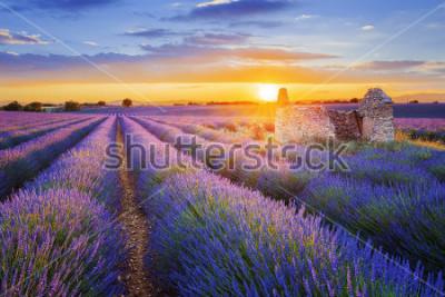 Papiers peints Le soleil se couche sur une belle lavande pourpre classée à Valensole. Provence, france