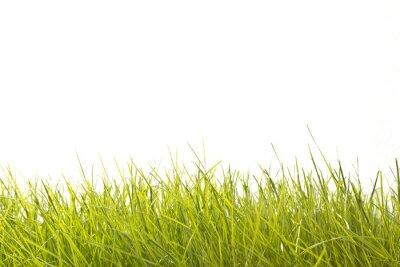 Papiers peints Leaves of Grass