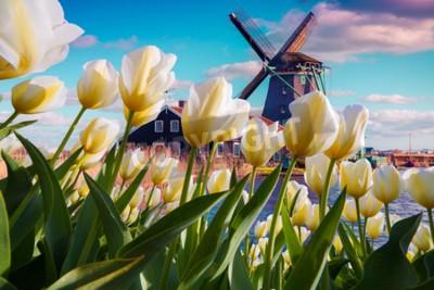 Papiers peints Les célèbres moulins à vent hollandais parmi des fleurs de tulipes blanches en fleurs. Scène extérieure ensoleillée aux Pays-Bas. Beauté de fond de concept de campagne. Collage créatif