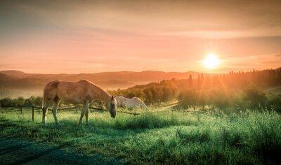 Papiers peints Les chevaux sauvages et le lever du soleil toscan