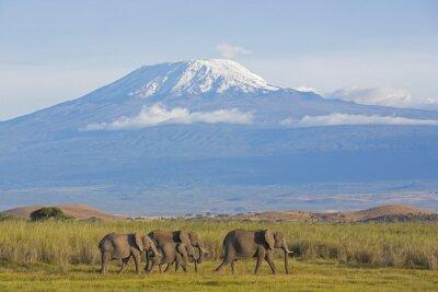 Papiers peints Les éléphants avec Kilimandjaro