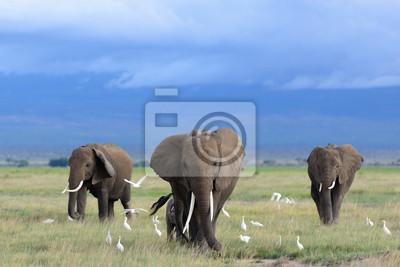 Papiers peints Les éléphants d'Afrique / Kenya