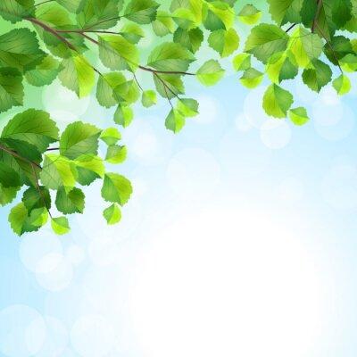 Papiers peints Les feuilles vertes des branches d'arbres vecteur de fond