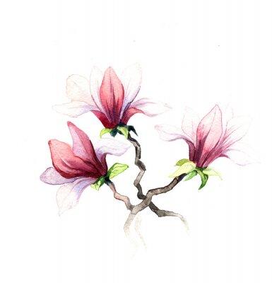 Papiers peints les fleurs de magnolia aquarelle isolé sur le fond blanc