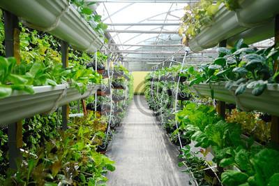 Papiers peints Les légumes sont cultivés à l'aide du système de fertigation. Les légumes peuvent être plantés dans un petit espace et disposés verticalement. En utilisant moins de sol et d'eau mélangés avec des engr