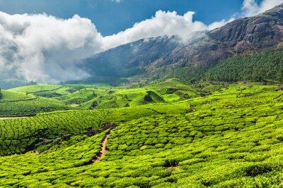 Papiers peints Les plantations de thé en Inde