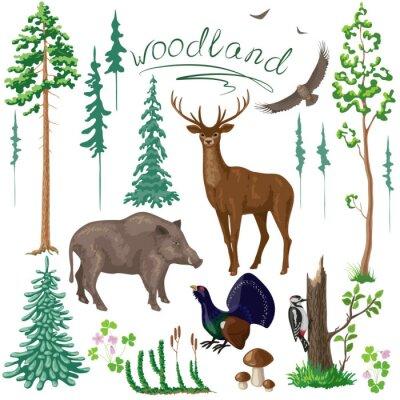 Papiers peints Les plantes et les animaux des bois Set