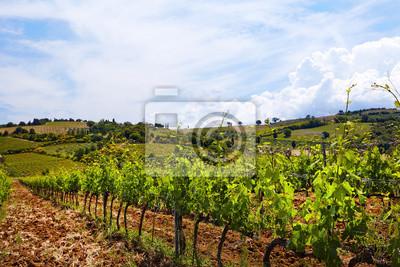 Les plantes et les collines de la vigne dans la région de Sienne, en Toscane, en Italie.