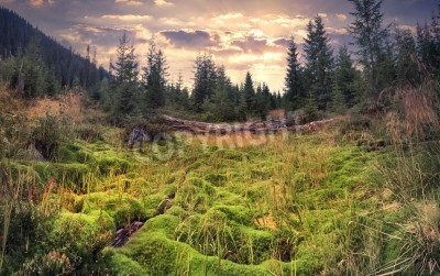 Papiers peints Lever de soleil de l'été coloré dans la forêt magique avec un immense tapis de mousse verte