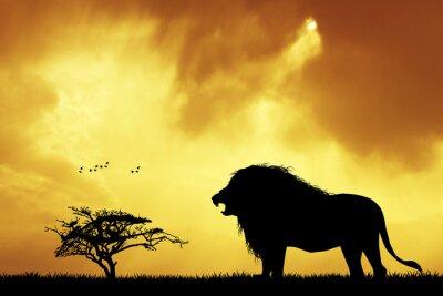 Papiers peints Lion, silhouette, Coucher soleil