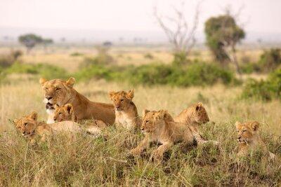 Papiers peints Little lion cubs relaxing