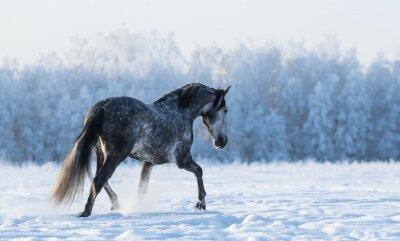 Papiers peints Lonely cheval promenades sur le terrain
