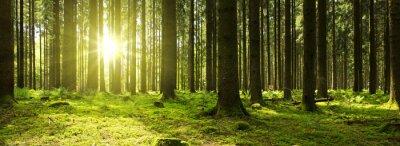 Papiers peints Lumière du soleil dans la forêt verte.