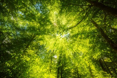 Papiers peints Lumière du soleil sur la canopée