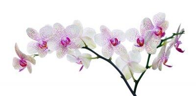 Papiers peints lumière la couleur des fleurs d'orchidées en taches roses sur fond blanc