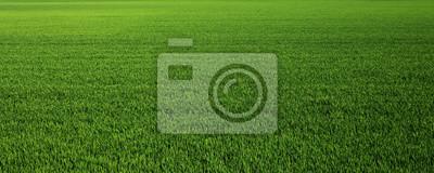 Papiers peints Lush green grass meadow background