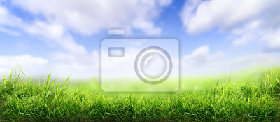 Papiers peints Lush spring green grass background with a sunny summer blue sky over fields and pastures.