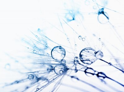 Papiers peints Macro photo Résumé des graines de plantes avec des gouttes d'eau.