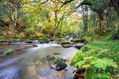Papiers peints Magical Forest River