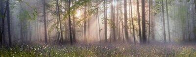 Papiers peints Magie, Carpathian, forêt, aube