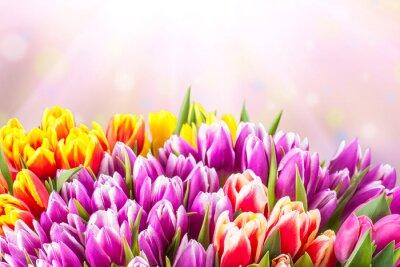 Papiers peints Magnifique tulipe fleurs