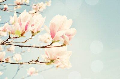 Papiers peints Magnolia fleur avec une fusée de soleil. Champ Peu de profondeur.