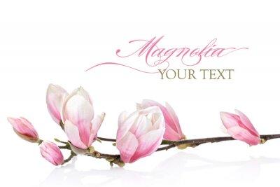 Papiers peints Magnolia fleur sur un fond blanc