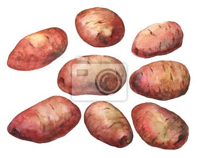 Main, peint, aquarelle, Illustration, pommes terre, blanc, fond