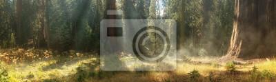 Papiers peints Matin au parc national de Sequoia, Etats-Unis
