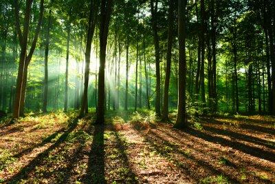 Papiers peints Matin dans la forêt