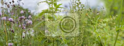 Papiers peints mauvaises herbes - ortie, chardon, absinthe sur un champ de près