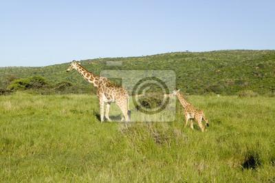 Papiers Peints Mre Bb Masai Girafe Vert Herbe Lewa