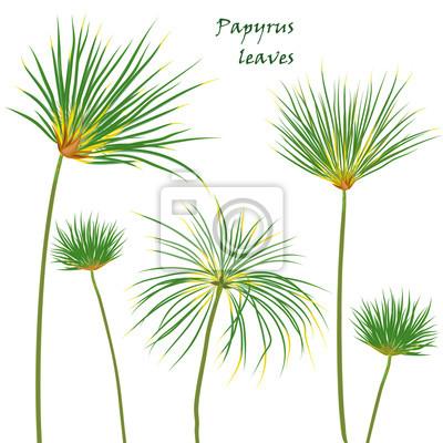 Mettre Des Feuilles De Papyrus Tropicales Dessin Realiste En Papier