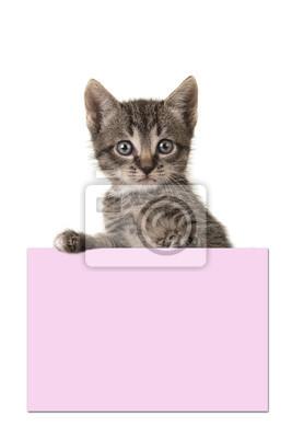 Mignon, 5, semaines, vieux, tabby, bébé, chat, tenue, rose, papier, planche, blanc ...