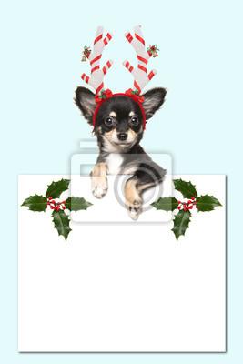 Mignon, chihuahua, chien, Porter, chapeau, tenue, blanc, papier, planche, salle, texte, décoré, noël, ornements, doux, bleu, fond