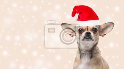 Mignon, chihuahua, chien, portrait, faire face, appareil-photo, Porter, santa, chapeau, bokeh ...