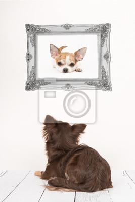 Mignon, chihuahua, chien, vu, dos, mensonge, Bas, salle, salle, regarder, chihuahua, chien, image, baroque, argent, cadre