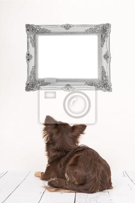 Mignon, chihuahua, chien, vu, dos, mensonge, Bas, salle, salle, regarder, vide, argent, baroque, cadre,