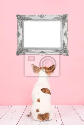 Mignon chihuahua, chien, vu, dos, séance, Vivant, salle, cadre, rose, fond, regarder, vide, argent, baroque, cadre, cadre, texte