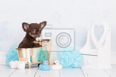 Mignon chiot chihuahua chien assis dans un bain d'or dans un contexte de salle de bains