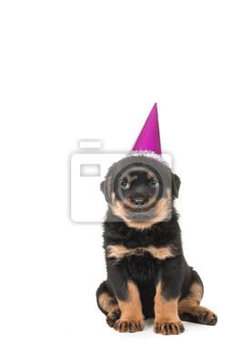 Mignon chiot rottweiler assis portant un chapeau de fête, chapeau d'anniversaire sur un fond blanc