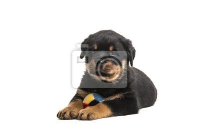 Mignon chiot rottweiler chien couché avec un ballon isolé au fond blanc