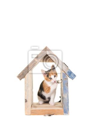 Mignon jeune chat dans un nichoir en bois jouant avec des plumes à un fond blanc