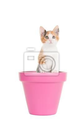 Papiers peints Mignon jeune chat écaille debout dans un pot de fleurs rose à un fond blanc
