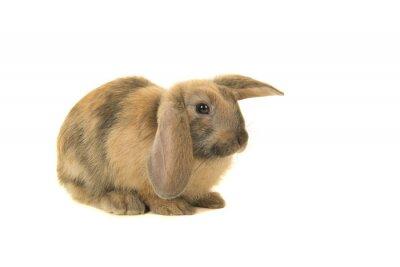 Mignon jeune lapin brun vu de côté isolé sur fond blanc