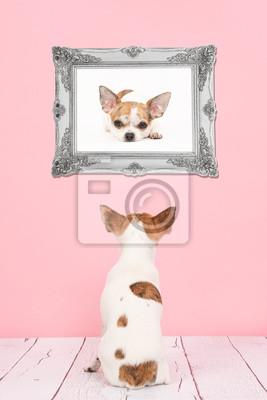 Mignon, séance, chihuahua, chien, vu, dos, Vivant, salle, rose, fond, regarder, sien, propre, image, baroque, argent, cadre
